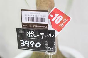 きらきらセール2013-2