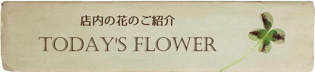 店内の花のご紹介